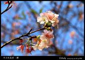中正紀念堂櫻與影:IMG_4843.jpg