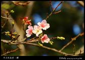 中正紀念堂櫻與影:IMG_4855.jpg