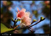 中正紀念堂櫻與影:IMG_4867.jpg
