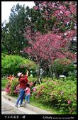 中正紀念堂之櫻:IMG_4368.jpg