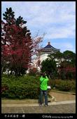 中正紀念堂之櫻:IMG_4389.jpg