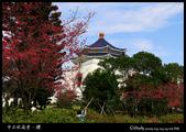 中正紀念堂之櫻:IMG_4392.jpg