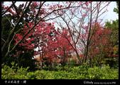 中正紀念堂之櫻:IMG_4402.jpg