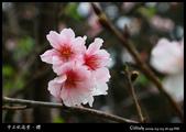 中正紀念堂之櫻:IMG_4414.jpg
