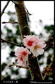 中正紀念堂之櫻:IMG_4418.jpg