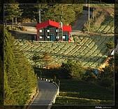 遠眺福壽山農場:DSC_7702