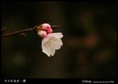 中正紀念堂櫻與影:IMG_4772.jpg