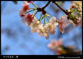 中正紀念堂櫻與影:IMG_4816.jpg