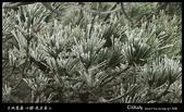 我在黃山三:G7X_IMG_9537.jpg