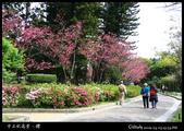中正紀念堂之櫻:IMG_4362.jpg