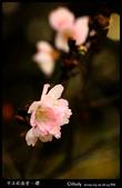中正紀念堂櫻與影:IMG_4754.jpg