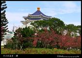 中正紀念堂之櫻:IMG_4382.jpg
