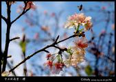 中正紀念堂櫻與影:IMG_4823.jpg