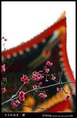 中正紀念堂之櫻:IMG_4347.jpg