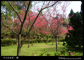 中正紀念堂之櫻:IMG_4396.jpg