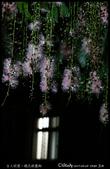 台大校園。夜的穗花棋盤腳:IMG_2354.jpg