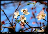 中正紀念堂櫻與影:IMG_4807.jpg