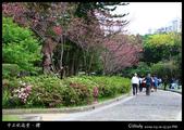 中正紀念堂櫻與影:IMG_4701.jpg