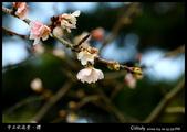 中正紀念堂櫻與影:IMG_4717.jpg