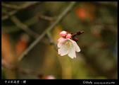中正紀念堂櫻與影:IMG_4786.jpg