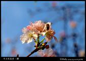 中正紀念堂櫻與影:IMG_4826.jpg