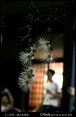 台大校園。夜的穗花棋盤腳:IMG_2525.jpg