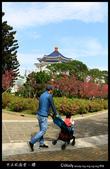 中正紀念堂之櫻:IMG_4383.jpg