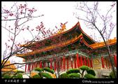 中正紀念堂之櫻:IMG_4339.jpg