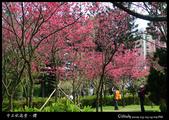 中正紀念堂之櫻:IMG_4398.jpg