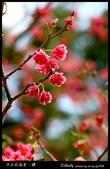 中正紀念堂櫻與影:IMG_4704.jpg
