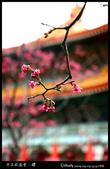 中正紀念堂之櫻:IMG_4345.jpg