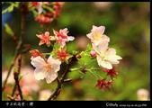 中正紀念堂櫻與影:IMG_4875.jpg