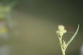 外拍第一回 -金獅湖:IMG_0098.JPG