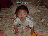 小桓桓特輯1(2006-11-02):酣睡小青蛙