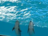 2005.04.01 花蓮太魯閣海洋公園二日遊:DSCF0068