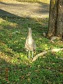 2007.12.07~12.08 台中遊:這是什麼鳥??