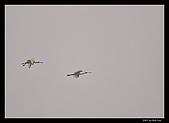 2007宜蘭黑面琵鷺:RIC_1022.jpg