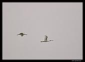 2007宜蘭黑面琵鷺:RIC_1023.jpg