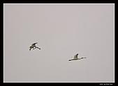 2007宜蘭黑面琵鷺:RIC_1027.jpg