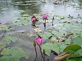 花蓮 蓮花池:123