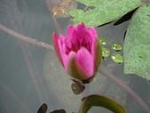 花蓮 蓮花池:124