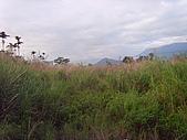 花東縱谷 平原 彩畫 風景 圖   (16):花東縱谷 大地豐收 風景 圖_01.jpg