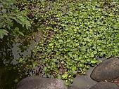 亞士都後花園風采:亞士都後花園池塘11.JPG