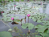花蓮 蓮花池:125