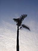 植物 專輯 花蓮旅遊服務網推薦:大椰子 花蓮旅遊服務網推薦_2.jpg