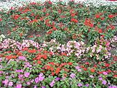 知卡宣森林公園 花蓮平價網站:ST838128_大小 .JPG