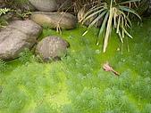亞士都後花園風采:亞士都後花園池塘6.JPG