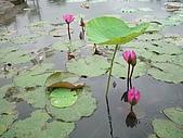 花蓮 蓮花池:126