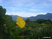 花蓮之花卉 百花:花蓮菜園 絲瓜天空_7.JPG