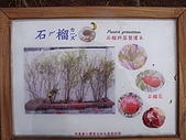 知卡宣森林公園 花蓮平價網站:石榴花果 花蓮平價網站1.JPG